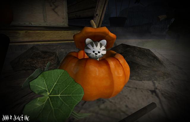 NUM pumpkin cat